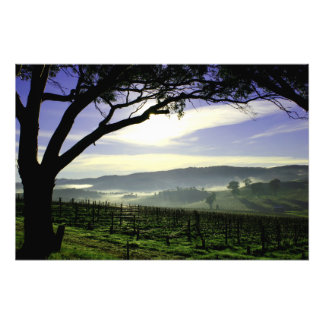 Barossa Valley Landscape Photo