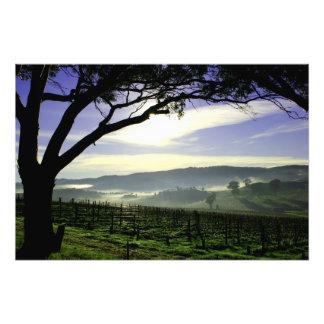 Barossa Valley Landscape Photo Print