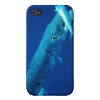 Barracuda eating its prey cover for iPhone 4