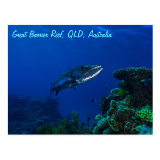 Barracuda on the Great Barrier Reef Postcard