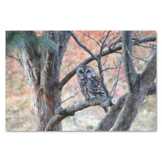 Barred Owl 6308 Tissue Paper