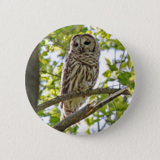 Barred Owl 6 Cm Round Badge