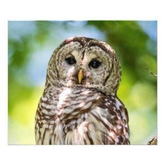 Barred Owl Art Photo