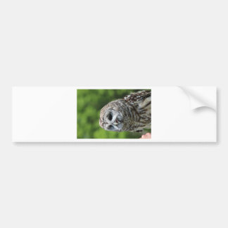 Barred Owl Bumper Stickers