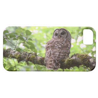 Barred Owl iPhone 5 Covers