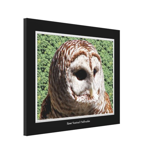 Barred Owl Close-up Wrapped Canvas Print