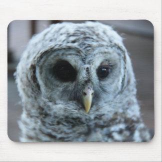 Barred Owl Computer Mousepad