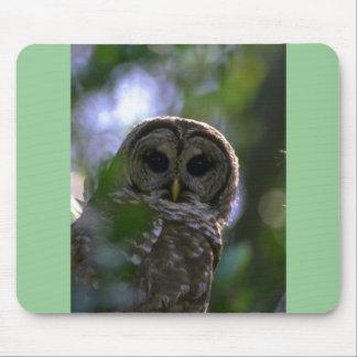 Barred owl Everglades Florida Mousepad