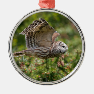 Barred Owl Flying past Christmas Tree Ornament