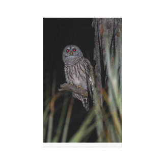 Barred Owl for your home or office ! Gallery Wrap Canvas
