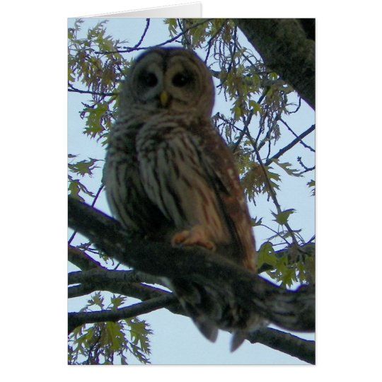 Barred Owl (Hoot Owl) Card