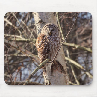 Barred Owl in a Birch Tree Photo Mousepads
