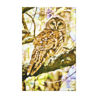 Barred Owl in Fall Canvas Prints