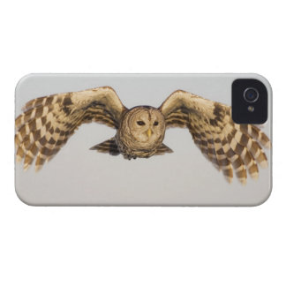 Barred Owl in Flight iPhone 4 Case-Mate Cases