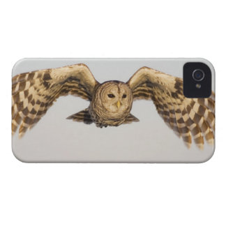 Barred Owl in Flight iPhone 4 Cover