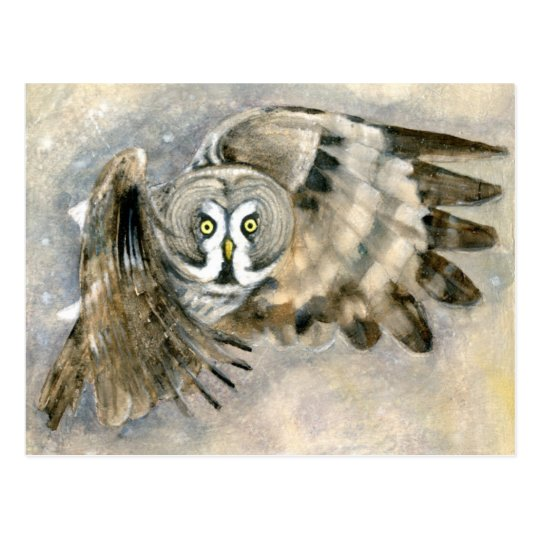 Barred Owl in Snow Postcard