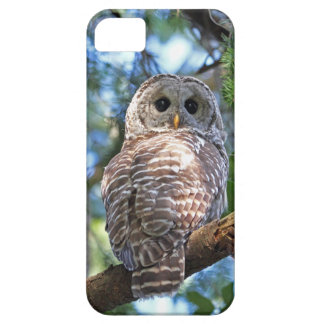 Barred Owl in the Forest iPhone 5 Case