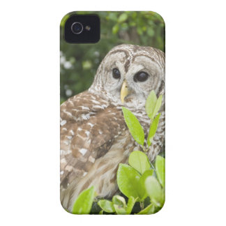 Barred Owl iPhone 4 Cover