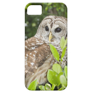 Barred Owl iPhone 5 Cases