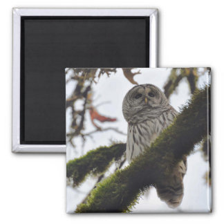 Barred Owl Magnet Fridge Magnets