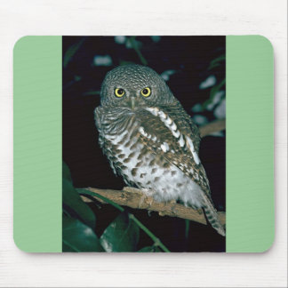 Barred Owl Mouse Pads