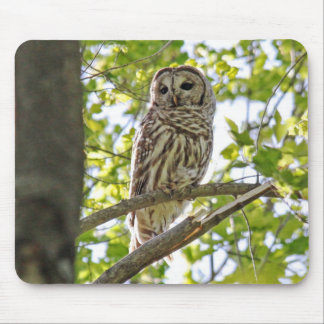 Barred Owl Mousepads