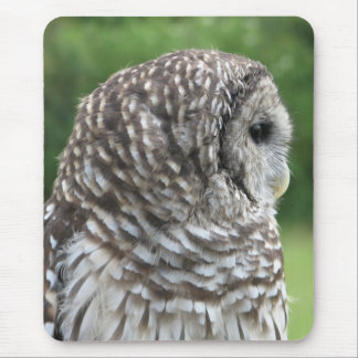 Barred Owl Portrait Mousepads