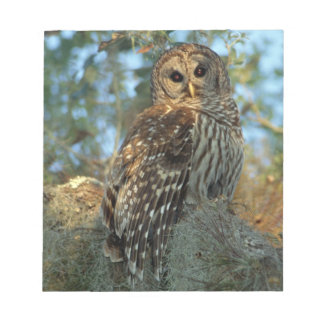 Barred Owl roosting in some Spanish Moss Notepad