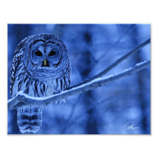 Barred Owl Snow Storm Photographic Print