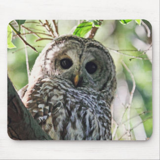 Barred Owl Staring Mousepad