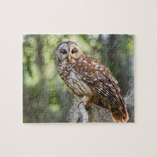 Barred Owl (Strix varia), adult in old growth Jigsaw Puzzle