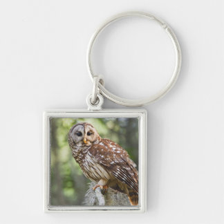 Barred Owl (Strix varia), adult in old growth Key Ring