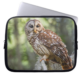 Barred Owl (Strix varia), adult in old growth Laptop Sleeve