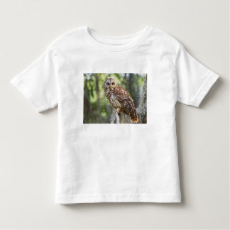 Barred Owl (Strix varia), adult in old growth T Shirt