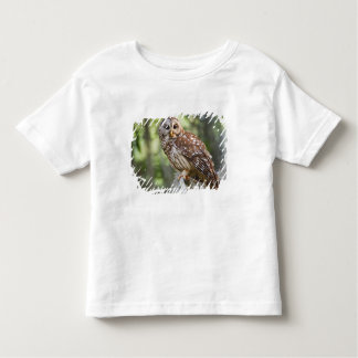 Barred Owl (Strix varia), adult in old growth Tee Shirts