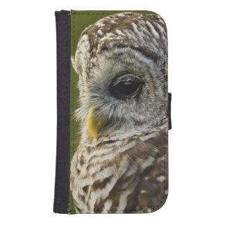Barred Owl, Strix varia, Michigan