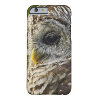 Barred Owl, Strix varia, Michigan Barely There iPhone 6 Case