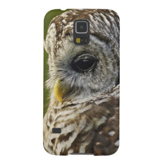 Barred Owl, Strix varia, Michigan Galaxy S5 Covers