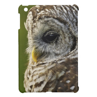 Barred Owl, Strix varia, Michigan iPad Mini Covers