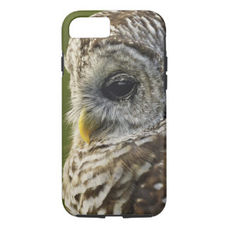 Barred Owl, Strix varia, Michigan iPhone 7 Case