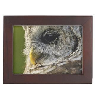 Barred Owl, Strix varia, Michigan Keepsake Box