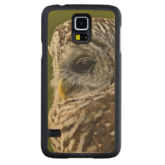 Barred Owl, Strix varia, Michigan Maple Galaxy S5 Slim Case