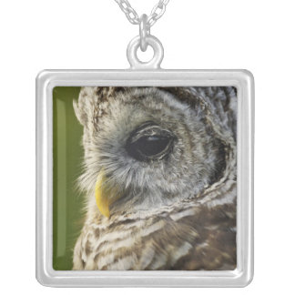 Barred Owl, Strix varia, Michigan Silver Plated Necklace