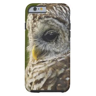 Barred Owl, Strix varia, Michigan Tough iPhone 6 Case