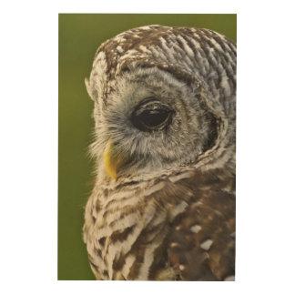 Barred Owl, Strix varia, Michigan Wood Prints