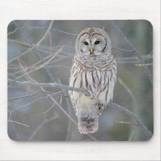 Barred Owl Strix Varia Mouse Pads