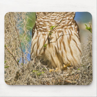 Barred Owl (Strix varia) perched in cypress tree Mouse Mat