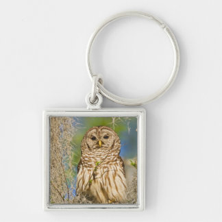 Barred Owl (Strix varia) perched in cypress tree Silver-Colored Square Key Ring