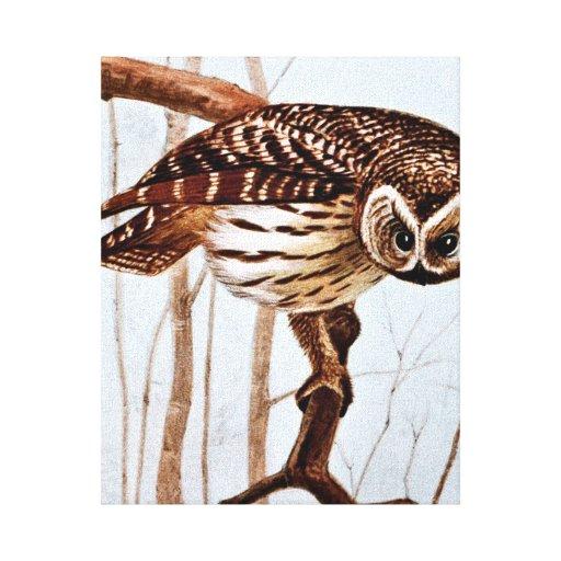 Barred Owl Vintage Wildlife Illustration Stretched Canvas Print