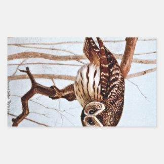Barred Owl Vintage Wildlife Illustration Stickers